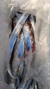 太刀魚! - [4/6]