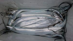 太刀魚! - [5/8]