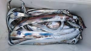 太刀魚~! - [3/5]