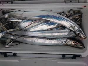太刀魚!!! - [3/4]