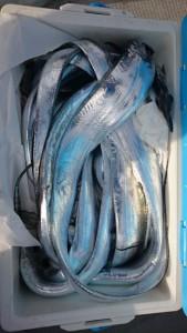 太刀魚!!! - [6/8]