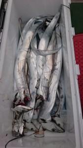太刀魚! - [4/4]