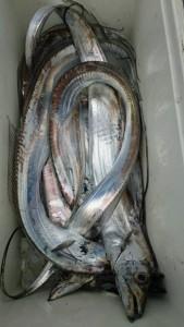 太刀魚!! - [3/4]