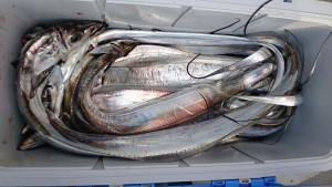太刀魚!!! - [7/8]