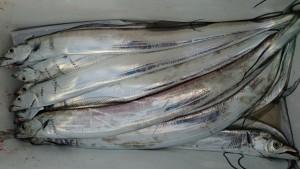 太刀魚!! - [6/6]