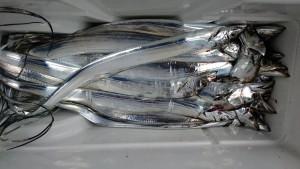 太刀魚!! - [2/2]