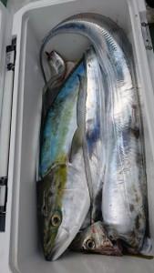 寒ブリ&太刀魚!! - [7/7]