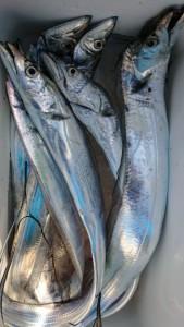 太刀魚!!! - [5/6]