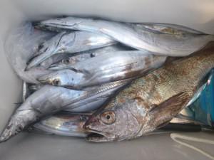 太刀魚!!! - [5/8]