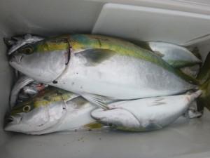 青物&太刀魚!!! - [6/7]
