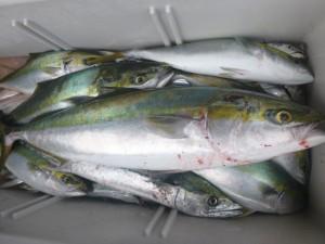 青物&太刀魚!!! - [7/7]
