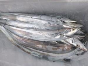 太刀魚!!! - [3/3]