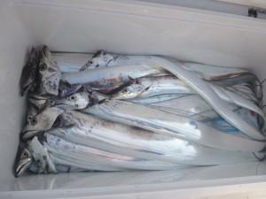 太刀魚!!! - [2/2]