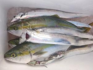 太刀魚!!! - [5/5]