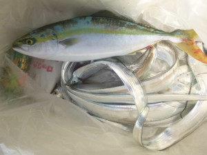 太刀魚!!! - [6/6]