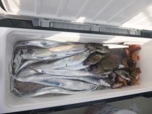 太刀魚!!! - [4/5]